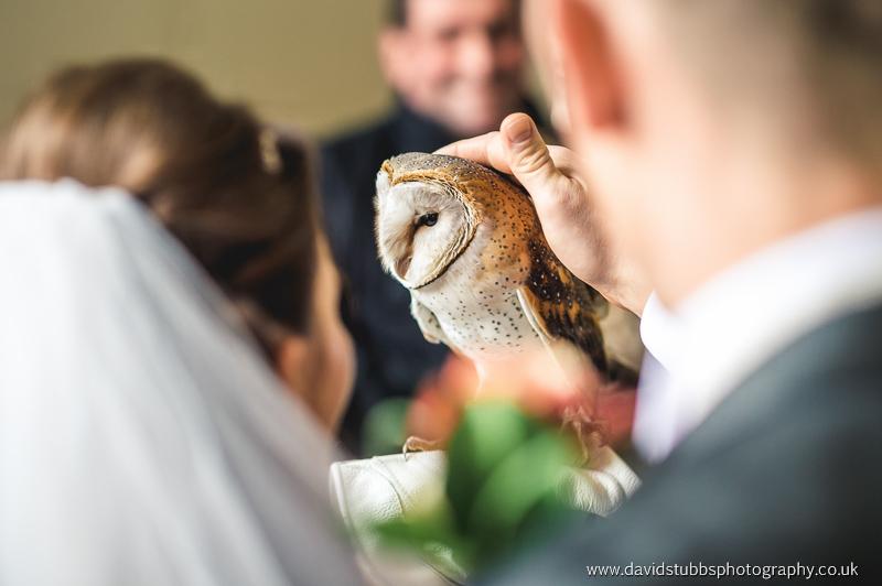 wedding owl
