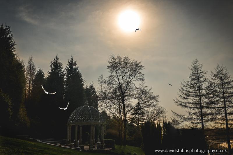 love doves flying towards the sun