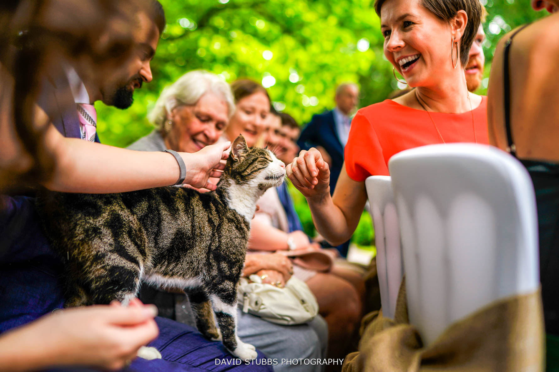 photo of the cat with wedding guests
