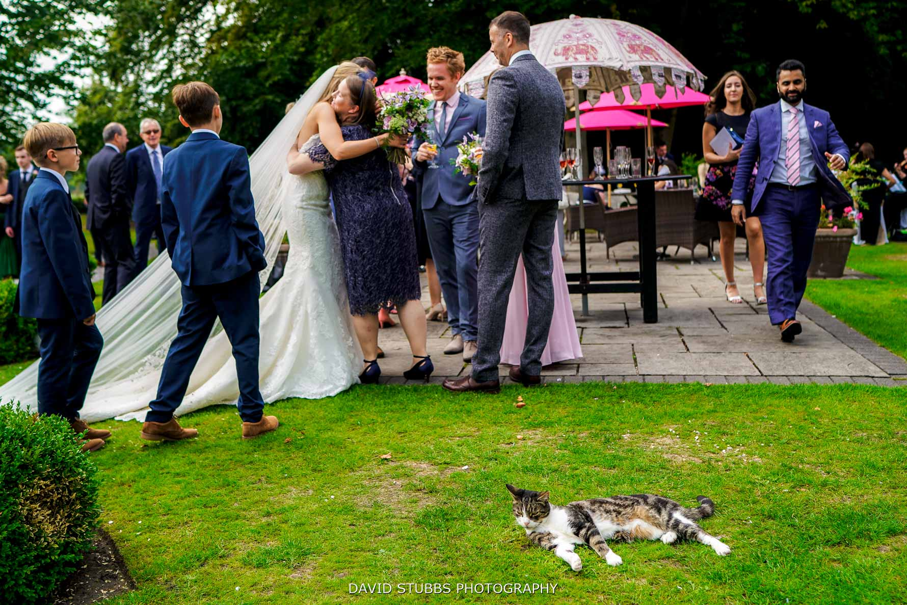 cat with wedding guests