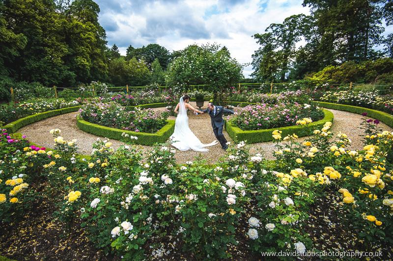 rose garden photo in colour