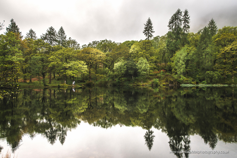 trees and reflection in water