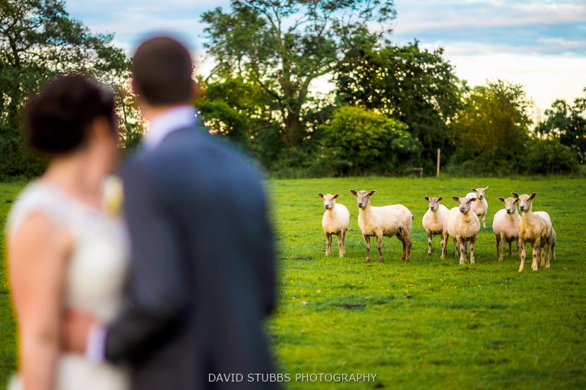 sheep looking at woman and husband