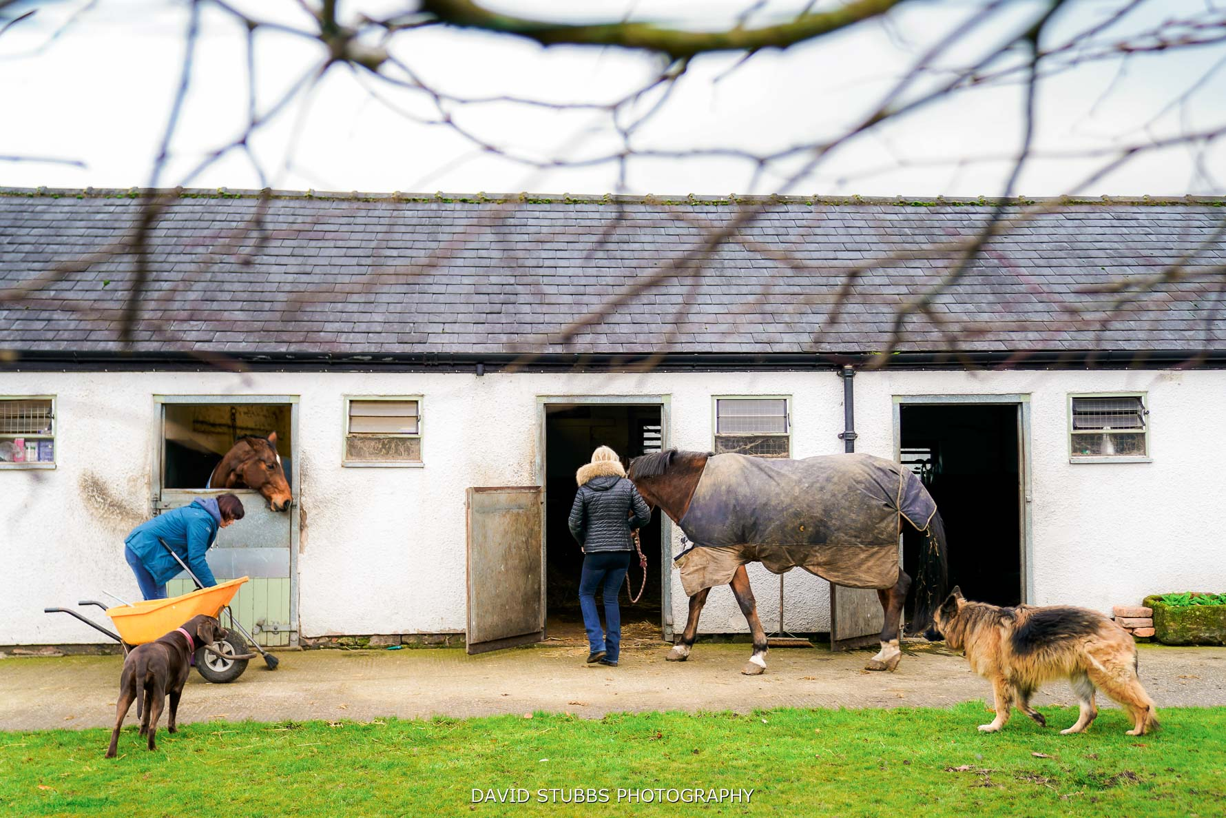 the holford estate horses